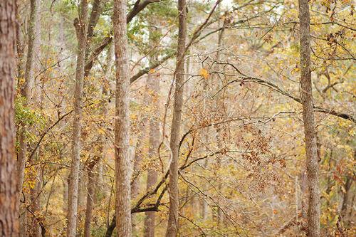 Trees web