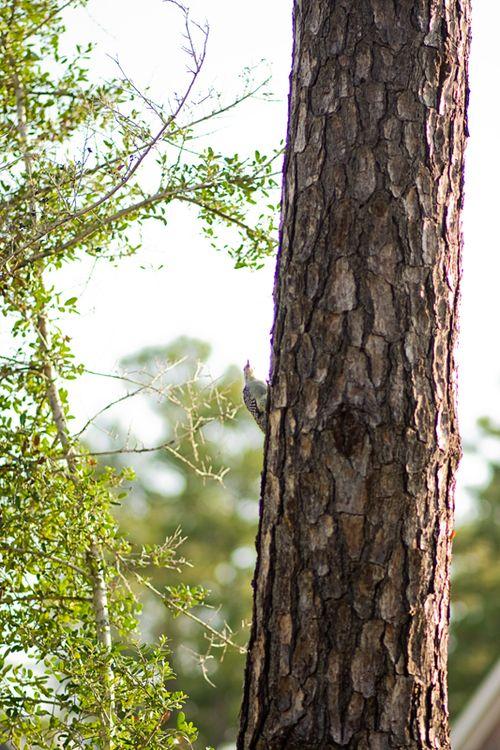 Woodpecker web