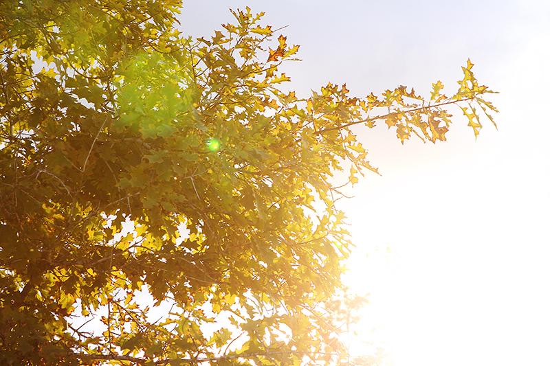 Sunflareleaves web