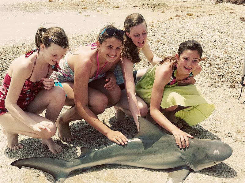 Sharkgirls web