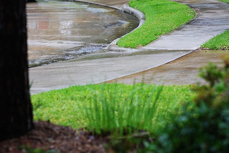 Rainy day web