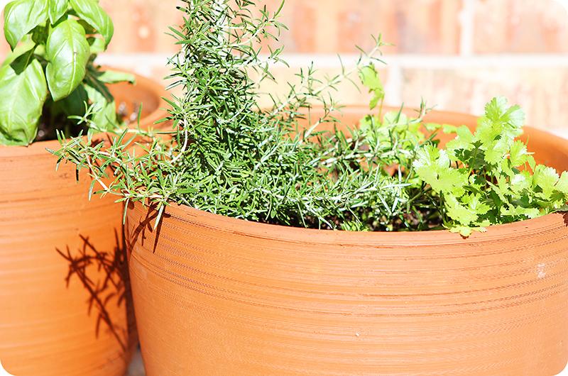 Spring herbs web