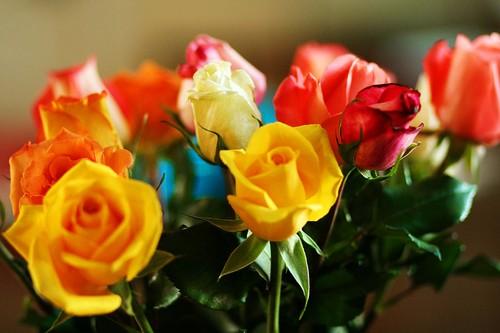 Roses36web